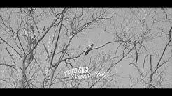 Toivo Susi - Vapaita lintuja (Virallinen musiikkivideo)