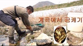 영강) 사금캐기2탄 계곡 풀뿌리 흙속에서 진짜금이나왔다!! 대박!!