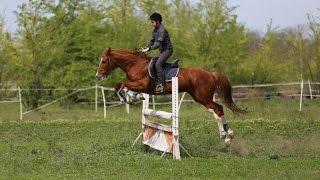 Конный спорт. 2 кадра 02.05.2017