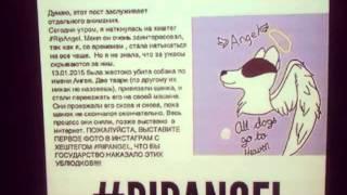 Убили собаку ангел:(