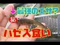 ハゼ釣りのエサは何が良いか#2【最強のエサ登場!】