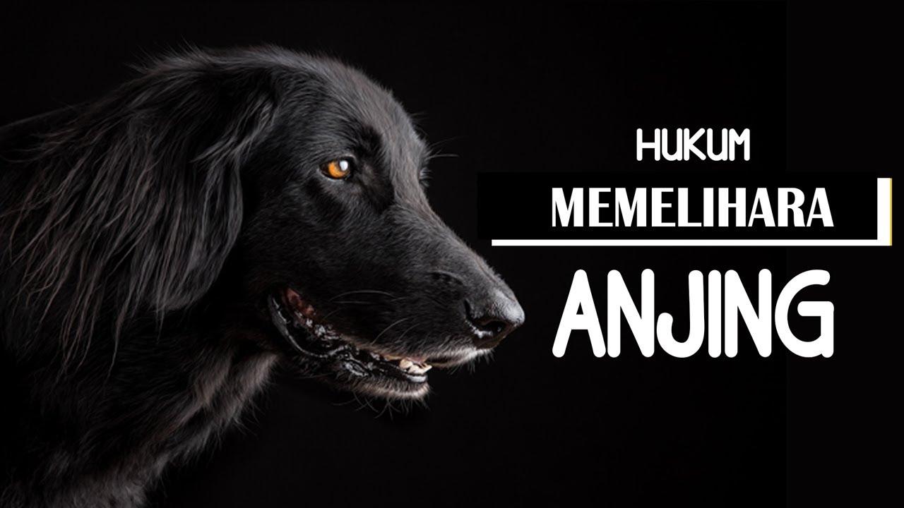 Polemik & Hukum Memelihara Anjing Di Dalam Islam - Ustadz Heri Iman Santoso | Asumsi
