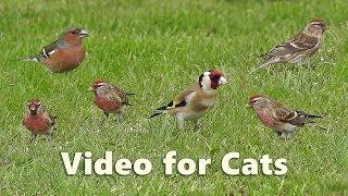 Videos for Cats : Little Bird Paradise - 8 HOURS