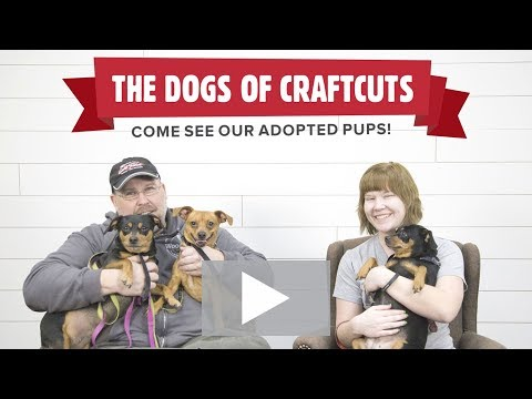 The Dogs of CraftCuts!