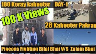 Pigeons Fighting Bilal Bhai V/S Zulain Bhai 180 Koray Kabotero…