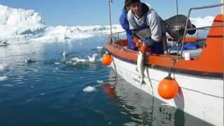 北冰洋的漁夫捕魚記 (Fishmen fishing in Arctic ocean)