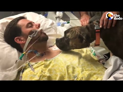 Dog Says Goodbye To Dying Dad at the Hospital | The Dodo