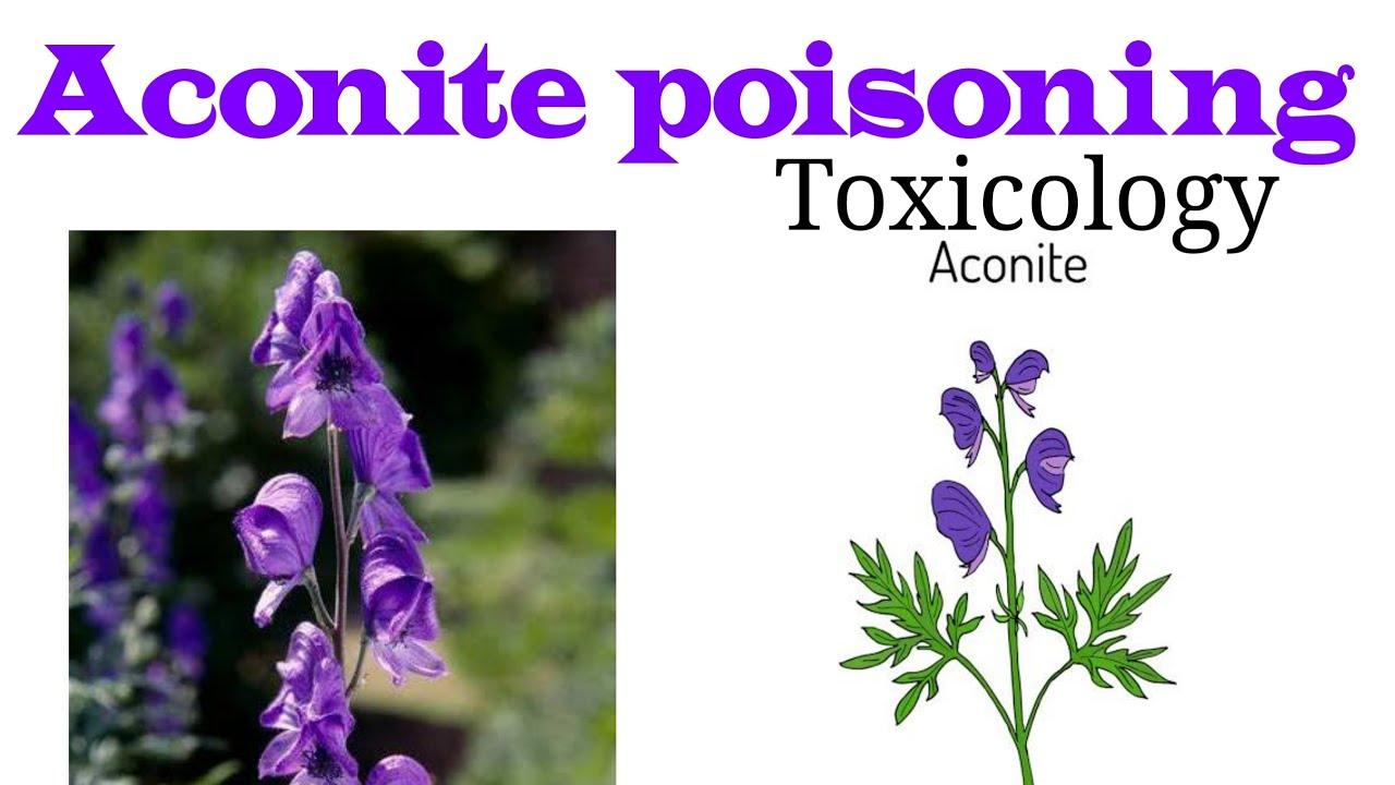 Aconite Poisoning Plant Poison Forensic Toxicology Youtube