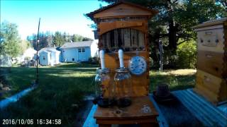 Flow Hive Honey Extraction in NY