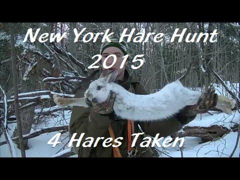 New York Hare Hunt - 2015(Beagle Boys Rabbit Hunting)