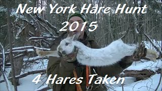 New York Hare Hunt - 2015(beagle Boys Rabbit Hunting)