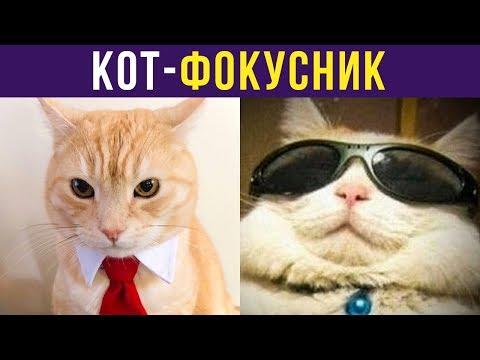 Приколы с котами. Кот-фокусник | Мемозг #215