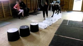 Barking Success With Sussex County Dog Training.