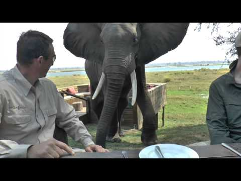 Zimbabwe Bull Elephant Crashes Into Tourists at Mana Pools