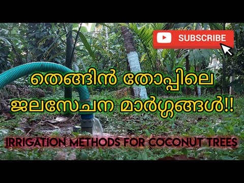 Latest irrigation techniques in coconut cultivation to improve coconut production in minimum cost