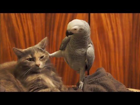 Смешные животные || Funny Animals #2