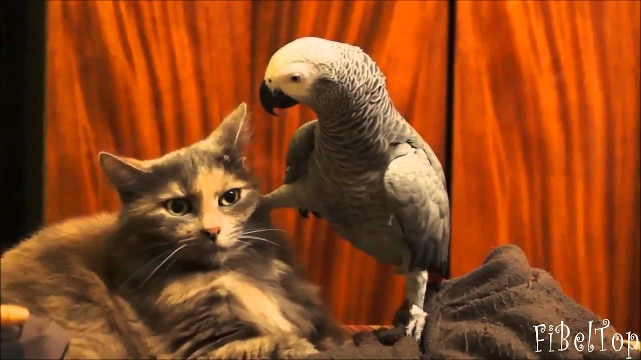 Смешное видео про животных 2015