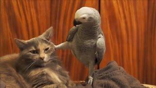 Смешное видео про животных 2015(Смешное видео про животных 2015 | Смешные животные | Приколы с животными 2015 | Смешное видео про кошек | Смешные..., 2015-02-28T10:04:46.000Z)