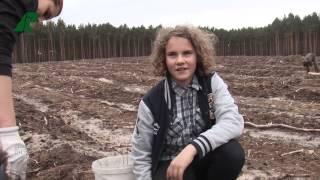 Nadleśnictwo Nowa Sól - Sadzenie lasu - harcerska lilijka