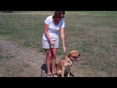 Elite Gundogs Basic Obedience Commands and Corrections