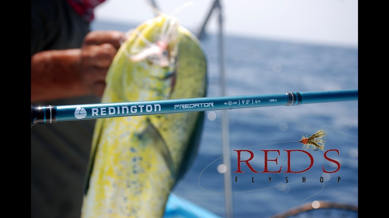Catching Dorado On A Redington Predator 10 Weight Rod And