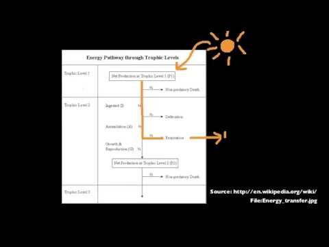 5.1.13 Explain that energy enters and leaves ecosystems, but nutrients must be recycled