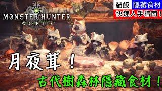 【MHW】古代樹森林隱藏食材!月夜茸!快速入手指南!  魔物獵人世界