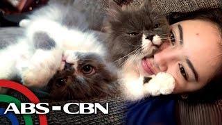 Millennial Dance Princess Ella Cruz With Her Cat Blink  Rated K