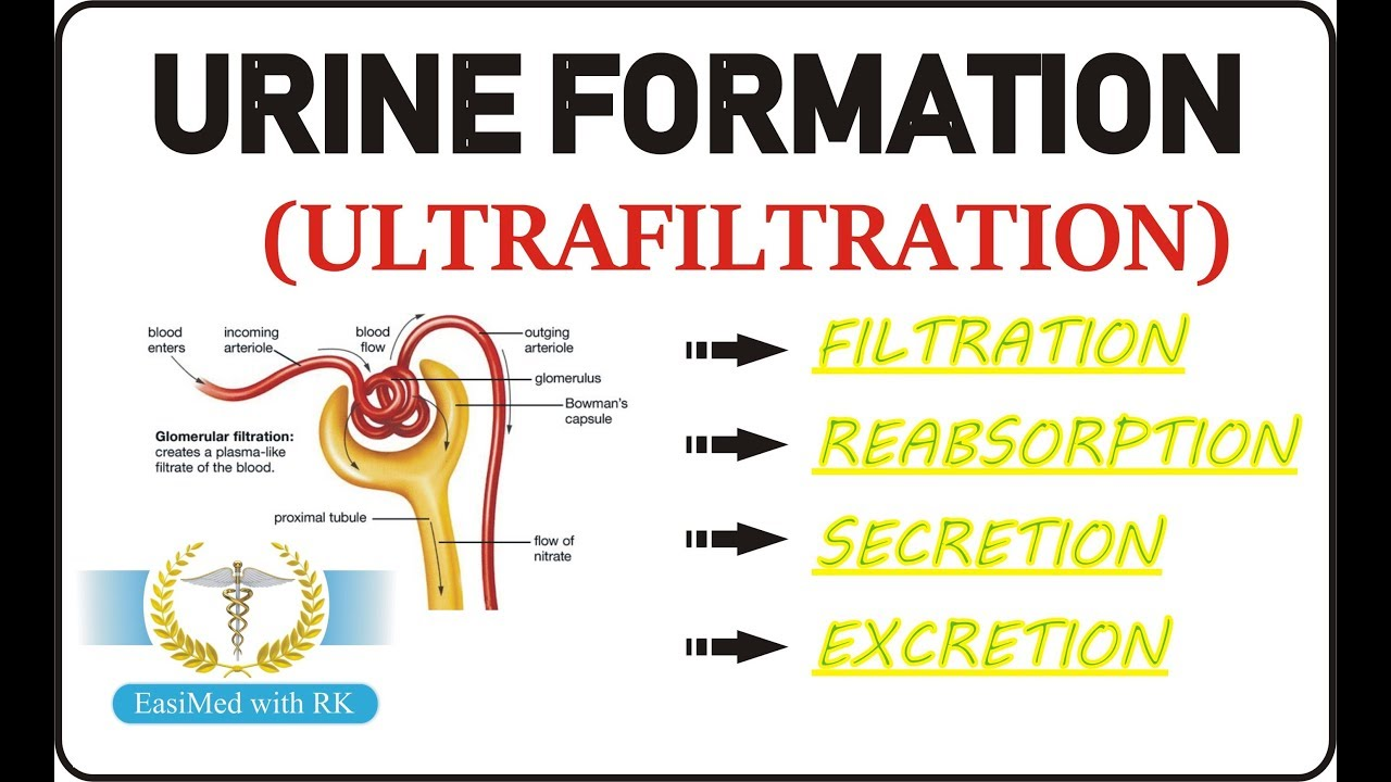 urine formation in hindi  [ 1280 x 720 Pixel ]