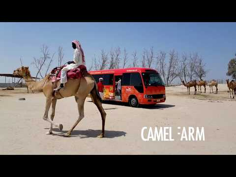 Visit Bahrain Tours | An Oasis in the Desert