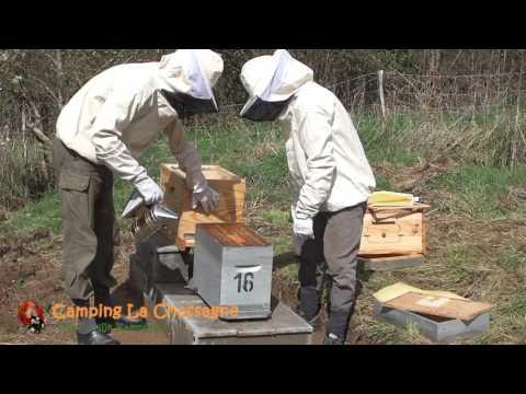 Bijenvolk Overzetten in Nieuwe Bijenkast met Flow Hives in France (#1) (English subtitles)
