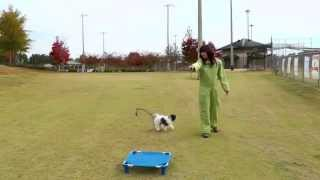 Puppy Training 10: Lilly Havanese, Distractions And Fun