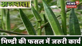 भिण्डी की फसल में क्या है जरुरी कार्य | Bhindi (LadyFinger) Farming| Annadata [August 5, 2019]