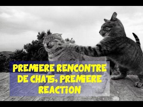 Première rencontre entre chats, première réaction