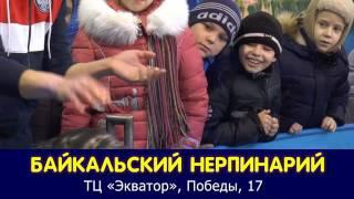Репортаж. Байкальские Нерпы в Кузнецке(, 2017-01-30T11:43:36.000Z)