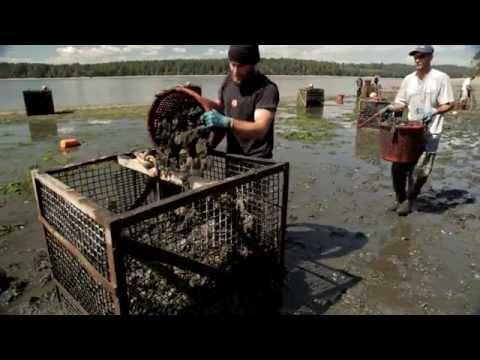 Oyster Farmers And Ocean Acidification