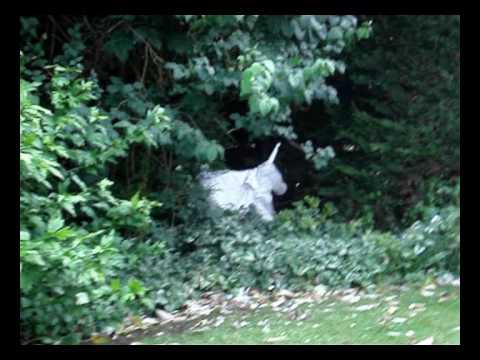 Unicorn Sighting and Attack caught on tape. Amazing ...  Unicorn Sightin...