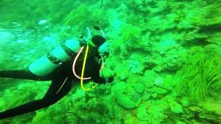 Lionfish Hunt Grenada June 2017