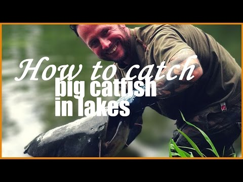 How To Catch Big Catfish In French Lakes: Rig Setup, Tackle, Bait And Landing A 77lb Specimen!