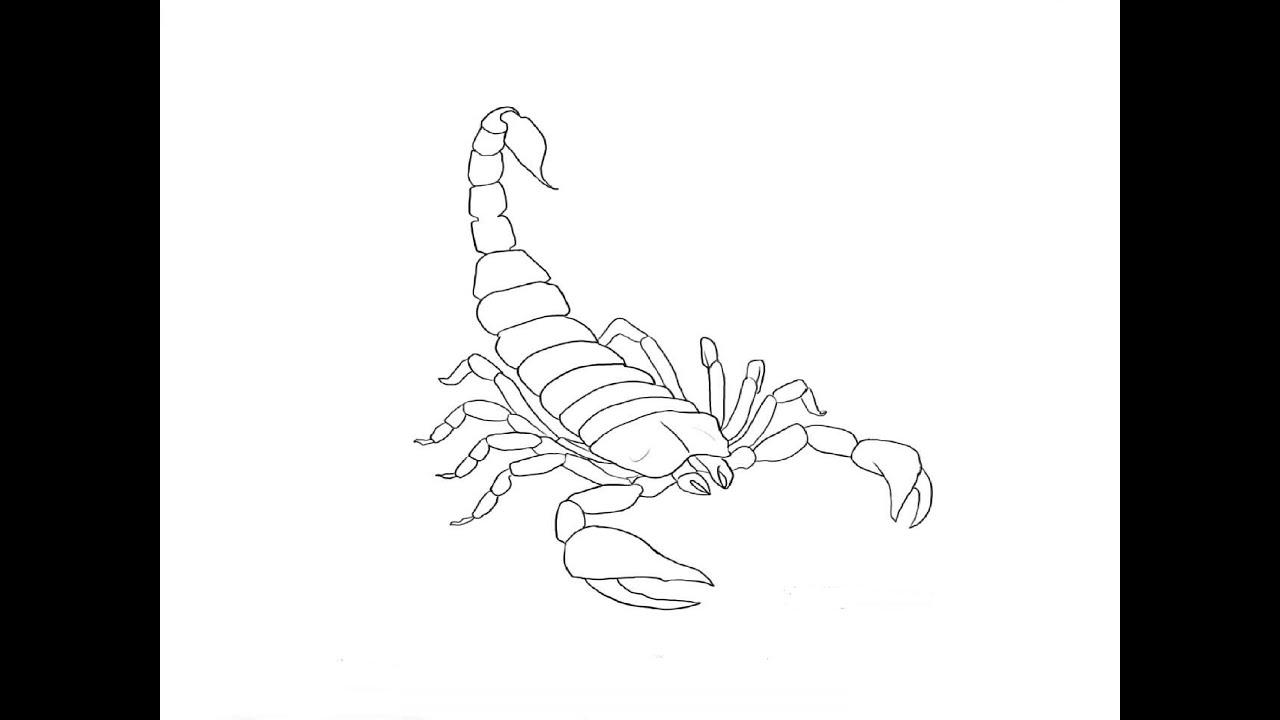 Как нарисовать скорпиона поэтапно фото