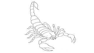 How to Draw a Scorpion / Как нарисовать скорпиона