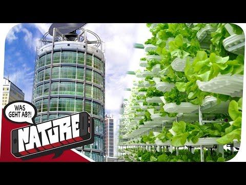 Vertical Farming - in den Himmel gegen Hunger! WGA NATURE