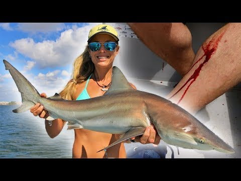 When Fish ATTACK Fishermen! Inshore SHARK Fishing!