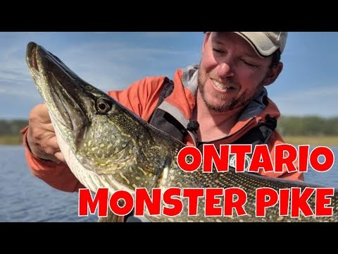 Monster Northern Pike In Ontario | Striker's Point Lodge