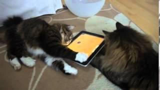 Для Котов Игры в кошки мышки на iPad!