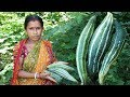 Snake Guard with Egg Recipe by my Mother   Beautiful Village Chichinda Cooking