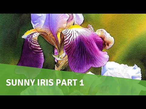 Watercolor Painting Demo - Sunny Iris PART 1