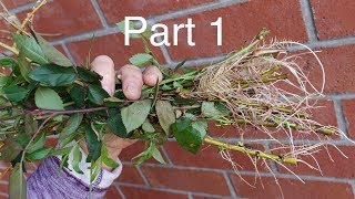 Rooting Practically Anything Without Root Hormone.Part 1.