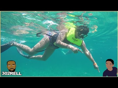 Snorkeling in the Bahamas Awesome Underwater HD Fish Coral Reef & More