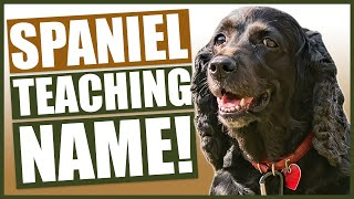 PUPPY TRAINING! Teaching Your SPANIEL Puppy Their Name